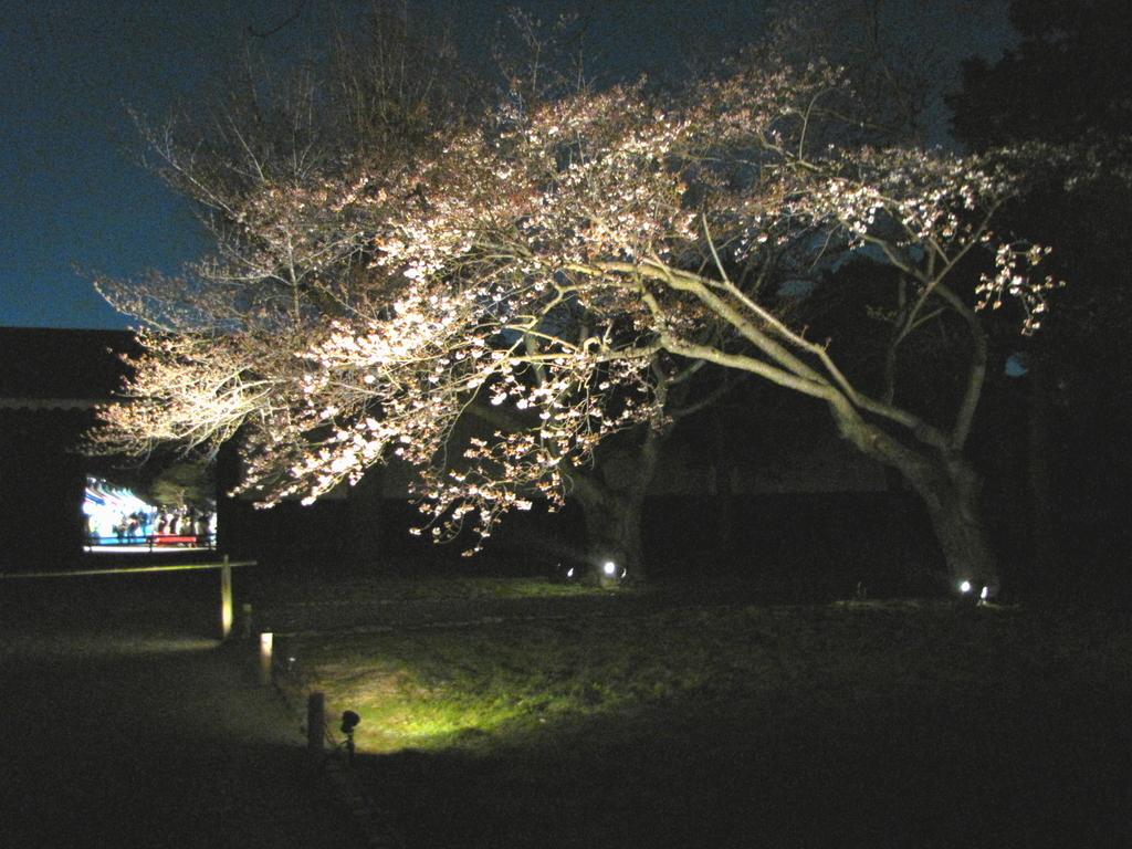 2009京都 二条城07