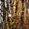晩秋の裏磐梯-2