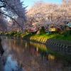 桜と五条川