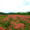 雄大な北海道?