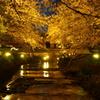 感動!!夜桜