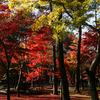 通り過ぎる秋...