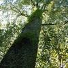 寄らば大樹の陰