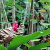 枯葉上の花