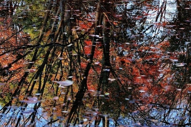 秋の色 05