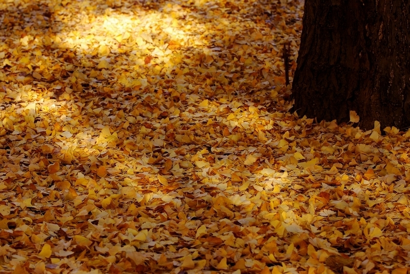 秋の色 03