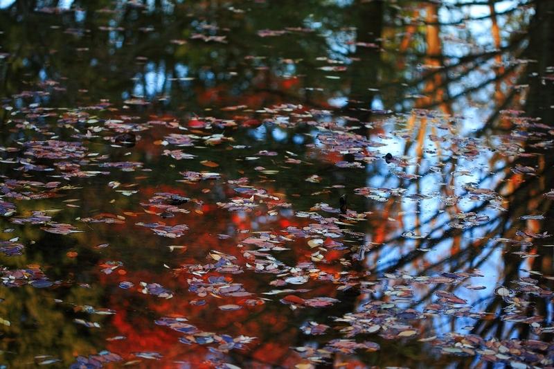 秋の色 06
