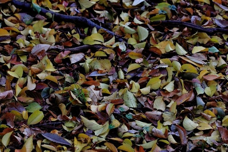 秋の色 04