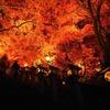 美しく燃える森