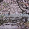 行徳!桜吹雪!