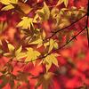 高野山の秋02