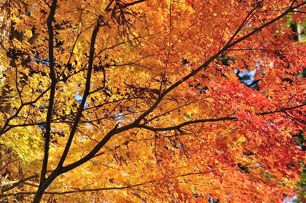 高野山の秋01