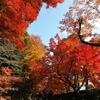 燃える京都