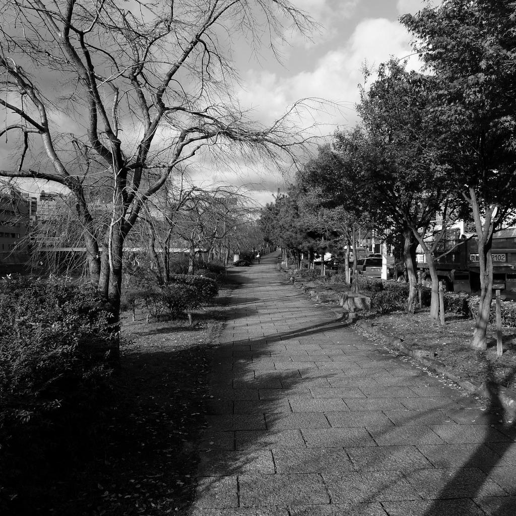 京都川端通りにて
