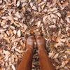 冬への一歩