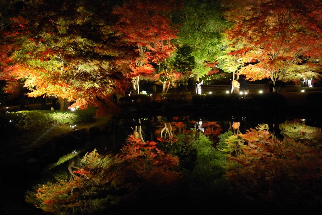 幻想的な2重層紅葉