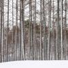 均等に並ぶ木