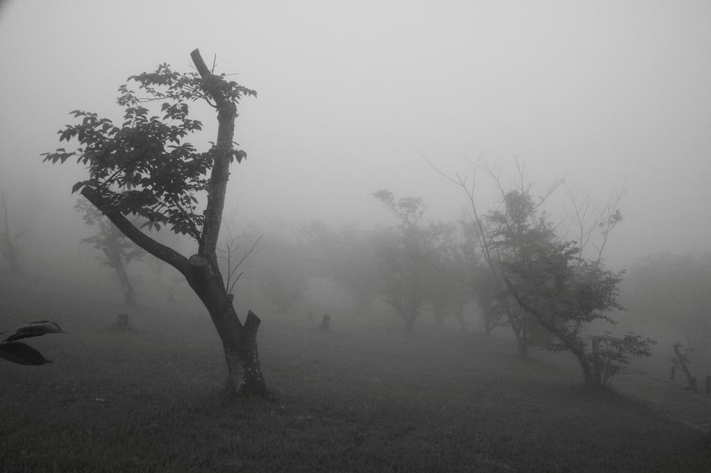 霧に包まれて・・