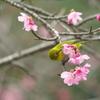 桜に誘われて