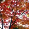 紅葉到来!