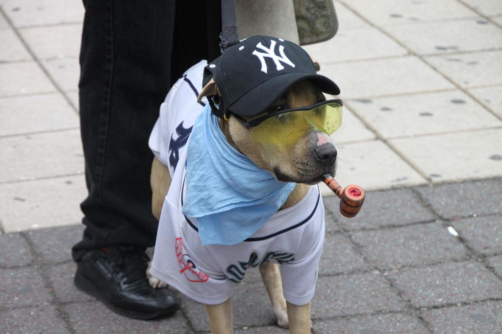 Yankes犬登場!