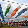 加茂市 鯉のぼり