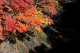 晩秋の奥多摩湖