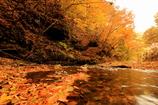 秋が流れていく