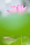FLOATING FLOWER Ⅱ