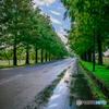 green road Ⅱ