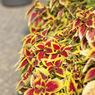 SONY DSLR-A700で撮影した植物(大宮第二公園にて)の写真(画像)