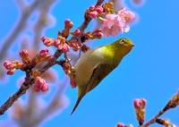 NIKON NIKON D7100で撮影した(春はいいぜ!)の写真(画像)