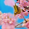 春だ、春が来たぞ!