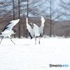 雪原の舞い -1