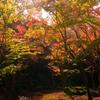 彩りの庭園