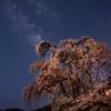 枝垂れ桜に昇る銀河