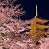 古都の春景~桜色に囲まれ~