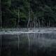 朝靄の立ち枯れ池
