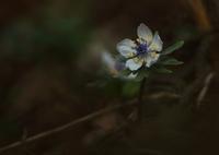 CANON Canon EOS 6Dで撮影した(目覚めの時)の写真(画像)
