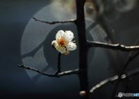 CANON Canon EOS Kiss X4で撮影した(輪)の写真(画像)