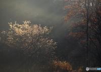 CANON Canon EOS 6Dで撮影した(秋の終焉)の写真(画像)