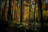 暗い森をぬけ