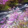 流瀑の彩り