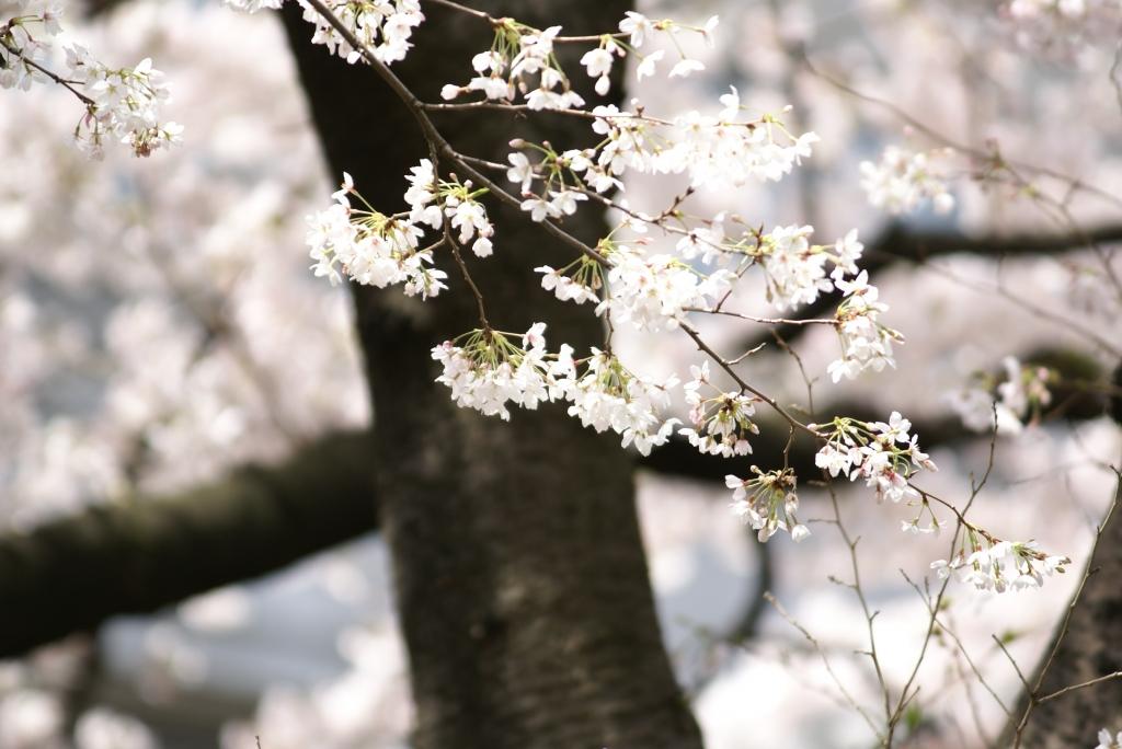 2007京都