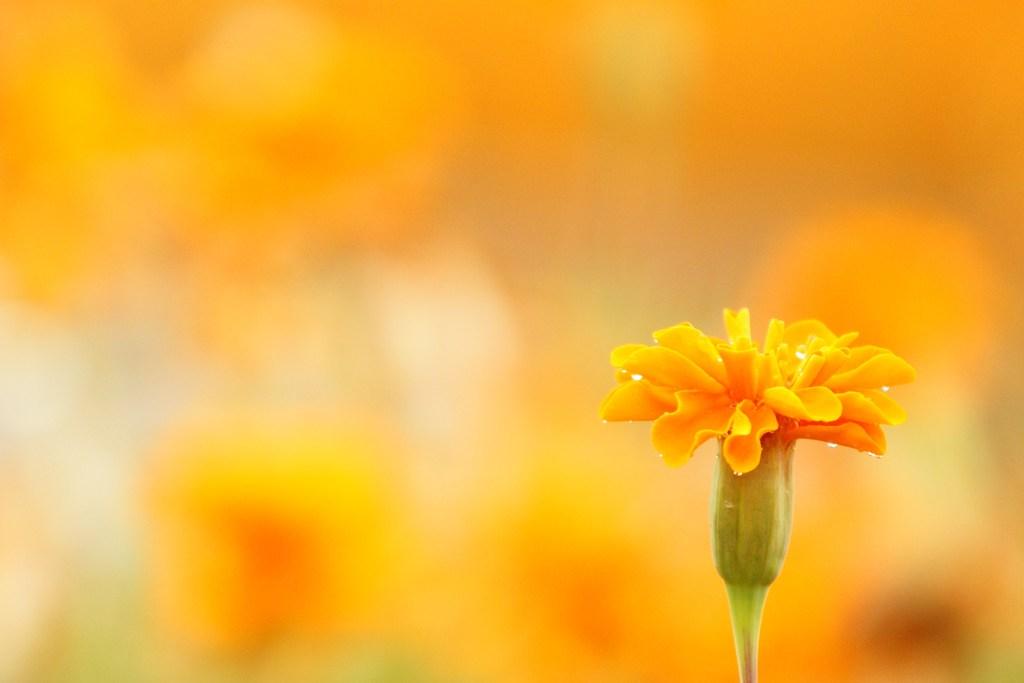 オレンジオレンジ