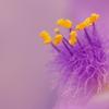 薄紫のやしろ