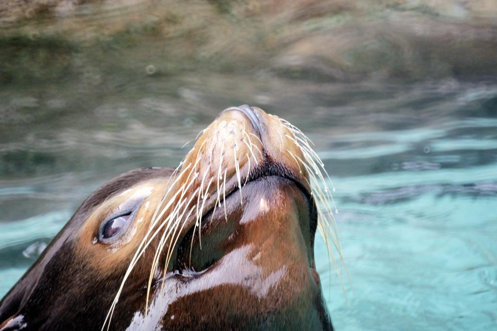 水中から・・ヌボ~~