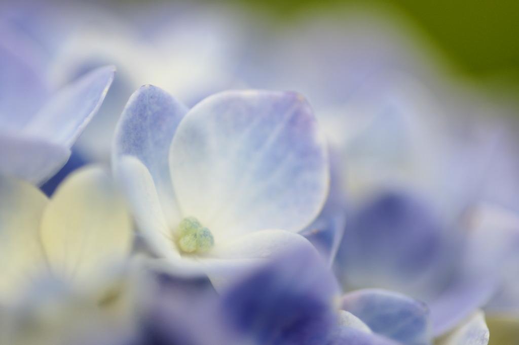 薄紫の囁き
