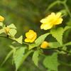 路傍の花Ⅱ