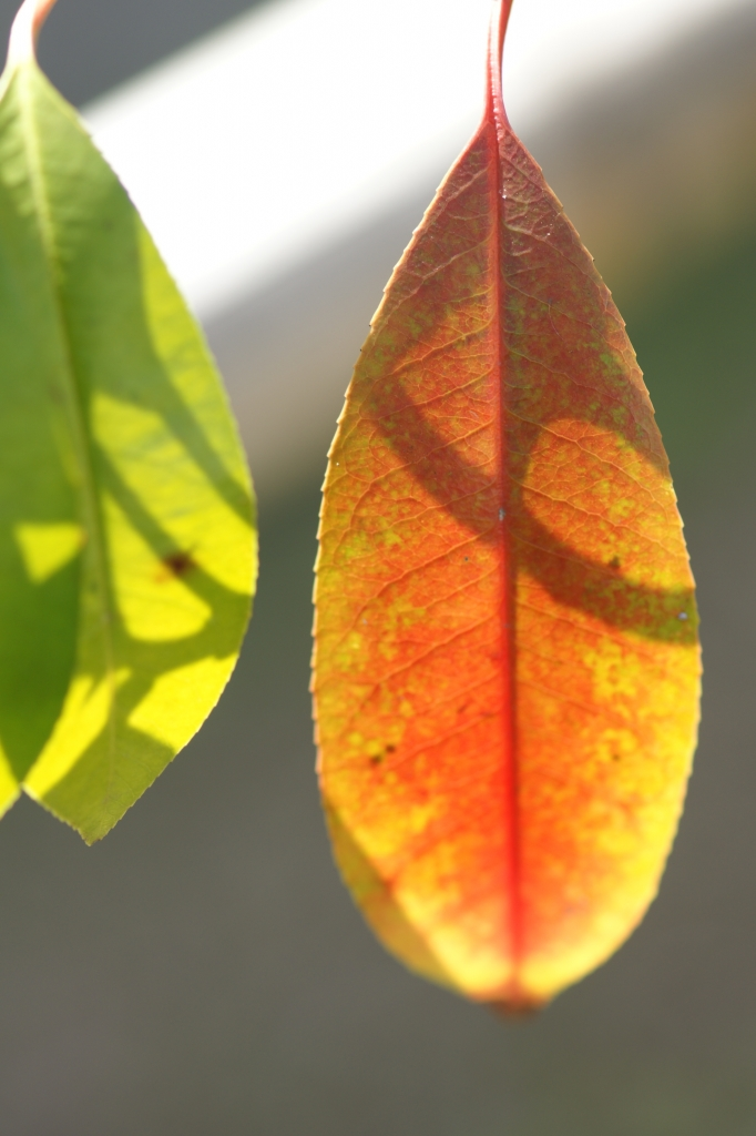 陽光の葉っぱ